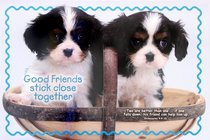 Poster Small: Good Friends Stick Close Together