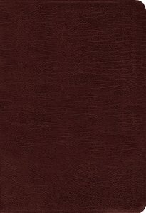 Amplified Holy Bible Burgundy (Black Letter Edition)